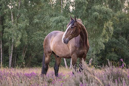 Lisa Saint Photo of a horse