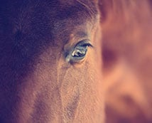 arranging-your-horses-cremation-dignity-equine-cremations